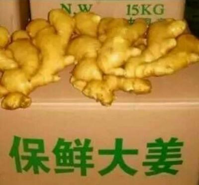 这是一张关于大黄姜 带土 8两以上的产品图片