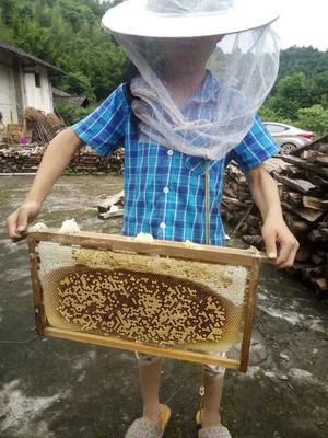 江西赣州会昌县中华蜜蜂
