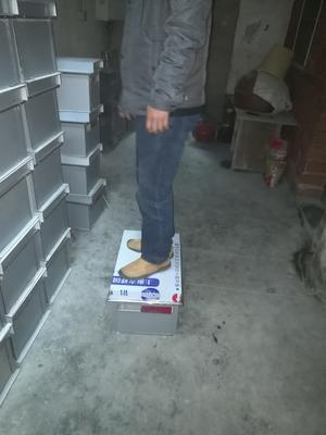 这是一张关于活框蜂箱 的产品图片