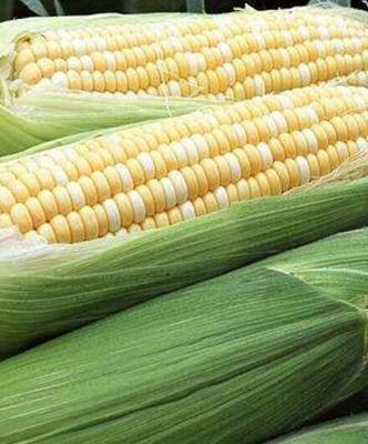 云南西双版纳景洪市甜玉米 1% 鲜货