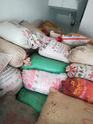 这是一张关于桐籽的产品图片