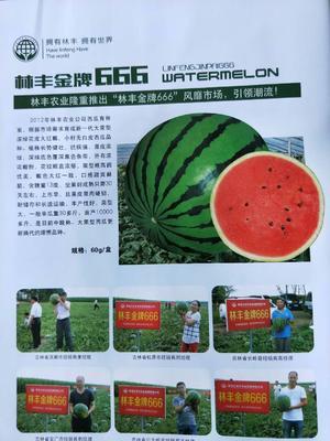 这是一张关于林丰西瓜种的产品图片