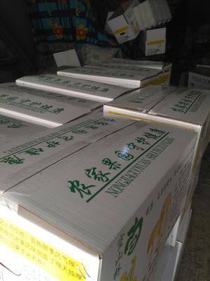 这是一张关于晚秋黄梨 300-350g 85mm以上的产品图片