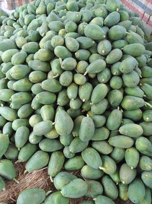 广西南宁西乡塘区红心木瓜 1 - 1.5斤