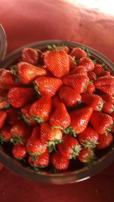 四川成都彭州市红颜草莓 30克以上
