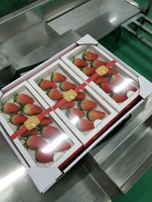 广西百色靖西县红颜草莓 20克以下