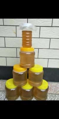 广西玉林北流市黑蜂蜂蜜 塑料瓶装 100% 2年以上