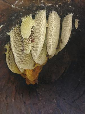 云南思茅镇沅彝族哈尼族拉祜族自治县云南冬蜂蜜 散装 98% 2年以上