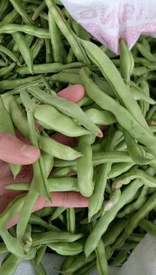 这是一张关于白花四季豆 10cm以上的产品图片