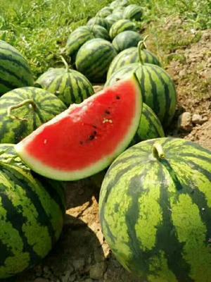云南西双版纳勐海县甜王西瓜 有籽 1茬 8成熟 8斤打底