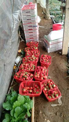 辽宁大连庄河市幸香草莓 20克以上