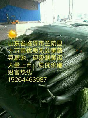 山东临沂兰陵县密刺黄瓜 30cm以上 干花带刺