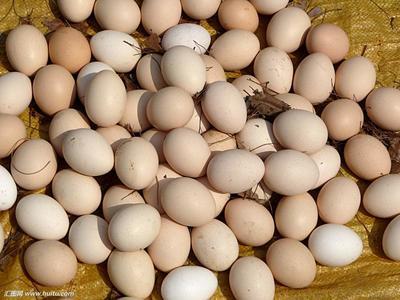 江西抚州乐安县山地鸡鸡蛋 食用 散装