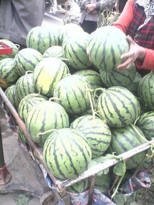 山东临沂沂水县8424西瓜 有籽 1茬 8成熟 8斤打底