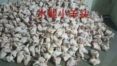 山西忻州忻府区羊肉类 简加工