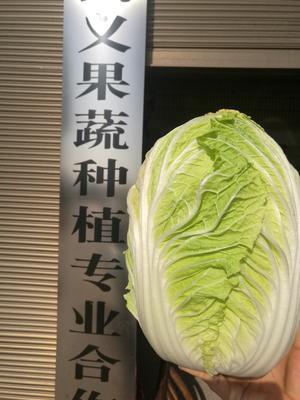湖南省岳阳市君山区阳春白菜 3~6斤 净菜