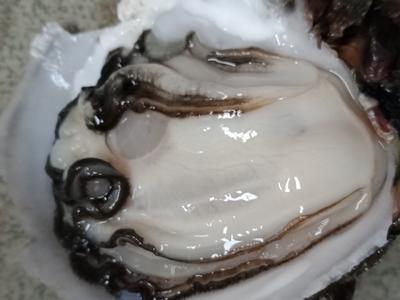广东佛山南海区珠海生蚝 野生 3-5只/公斤