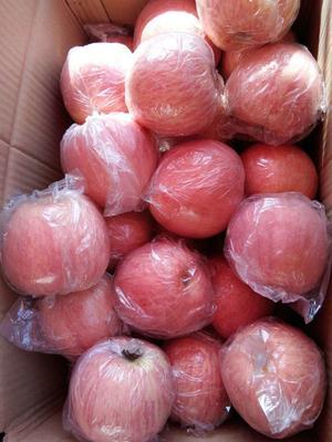 山西运城临猗县红富士苹果 纸+膜袋 全红 80mm以上