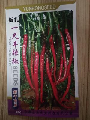 云南曲靖陆良县线椒种子 95%以上 常规种