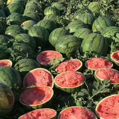 吉林省四平市公主岭市京欣西瓜 有籽 1茬 8成熟 10斤打底
