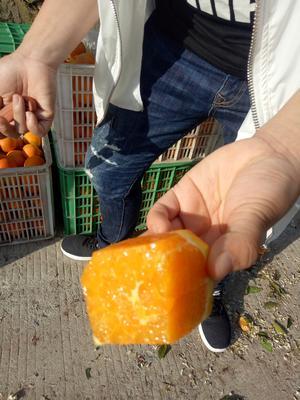 这是一张关于伦晚脐橙 60 - 65mm 4-8两的产品图片