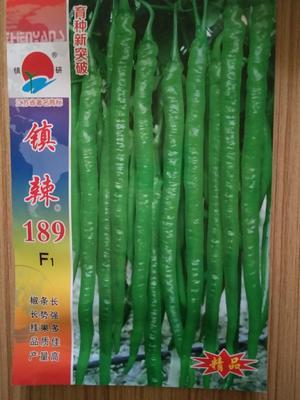 云南曲靖陆良县线椒种子 95%以上 杂交种