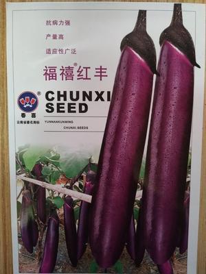云南曲靖陆良县茄子种子