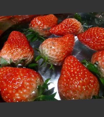 江苏连云港东海县奶油草莓 20克以下