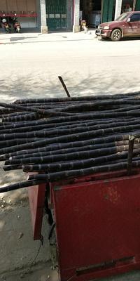 海南白沙白沙黑蔗 2 - 2.5m 2cm以下