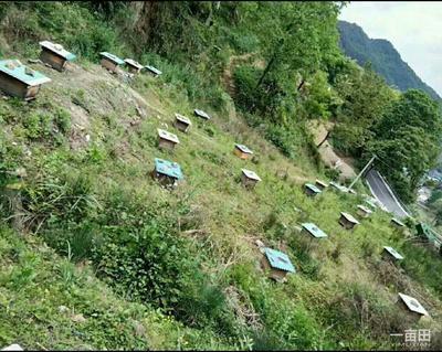 云南曲靖罗平县土蜂蜜 塑料瓶装 95%以上 1年