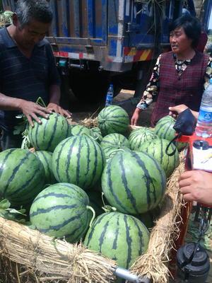 山东省临沂市沂水县京欣西瓜 有籽 1茬 8成熟 8斤打底