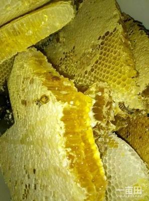 湖南湘西龙山县土蜂蜜 塑料瓶装 95%以上 1年