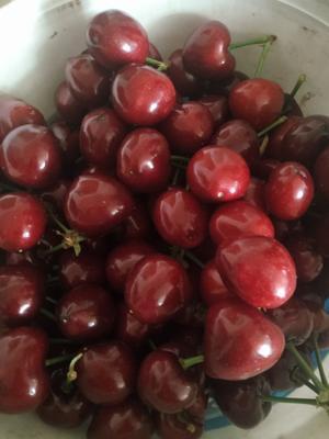 这是一张关于大樱桃 20mm以上 12-15g的产品图片