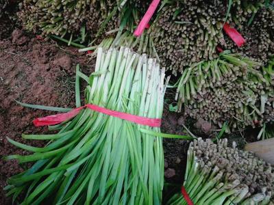 这是一张关于大叶韭菜 二茬 35~40cm的产品图片
