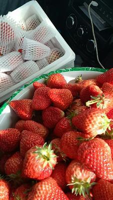 辽宁丹东东港市丹东草莓 20克以上