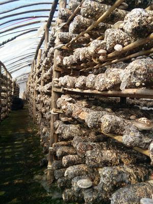 河南省三门峡市卢氏县废食用菌棒