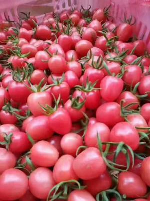 这是一张关于圆粉圣女果的产品图片