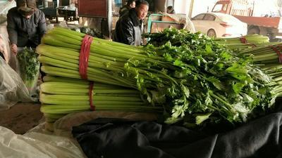 河北省邯郸市永年县西芹 60cm以上 大棚种植 0.5斤以下