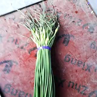 浙江省金华市义乌市金乡红帽蒜苔 一茬 60~70cm 精品