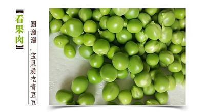 云南省红河哈尼族彝族自治州建水县水果豌豆 7-10cm 较饱满