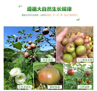 广西壮族自治区百色市田东县野生山茶油 5L