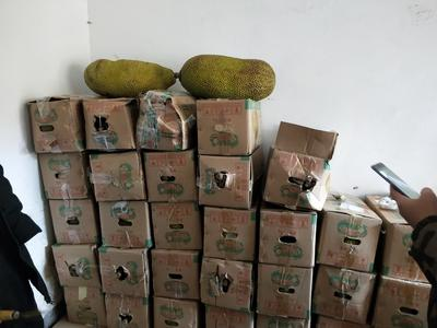 广东省深圳市龙岗区海南菠萝蜜 15斤以上