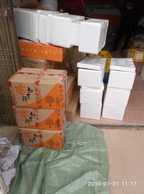 广西壮族自治区柳州市融安县脆皮金桔 4-5cm 1两以下