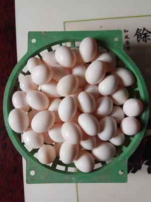 河南省平顶山市舞钢市白鸽蛋 食用 箱装