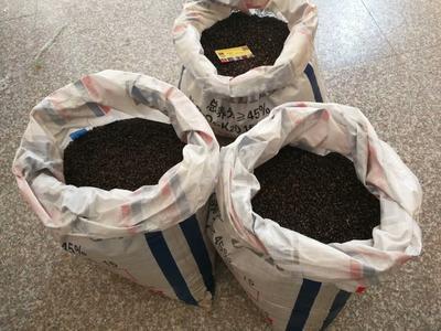 江西省上饶市鄱阳县粉红六号八月瓜 种植 150g以上