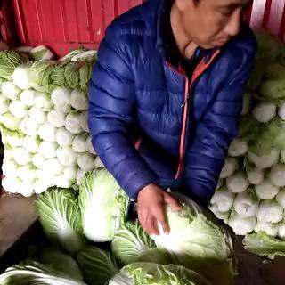 江苏省盐城市东台市阳春白菜 3~6斤 净菜