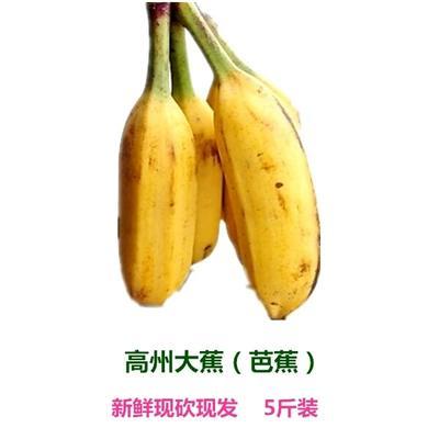 广东省广州市天河区芭蕉 七成熟 5.0斤
