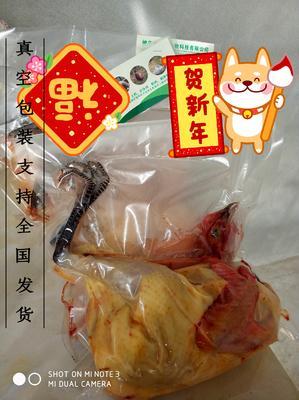 湖北省神农架林区神农架林区灰色珍珠鸡 2-4斤
