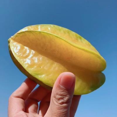 甜杨桃 3 - 4两