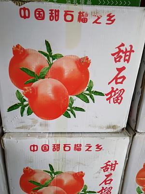 安徽省蚌埠市固镇县玉石籽石榴 0.6 - 0.8斤